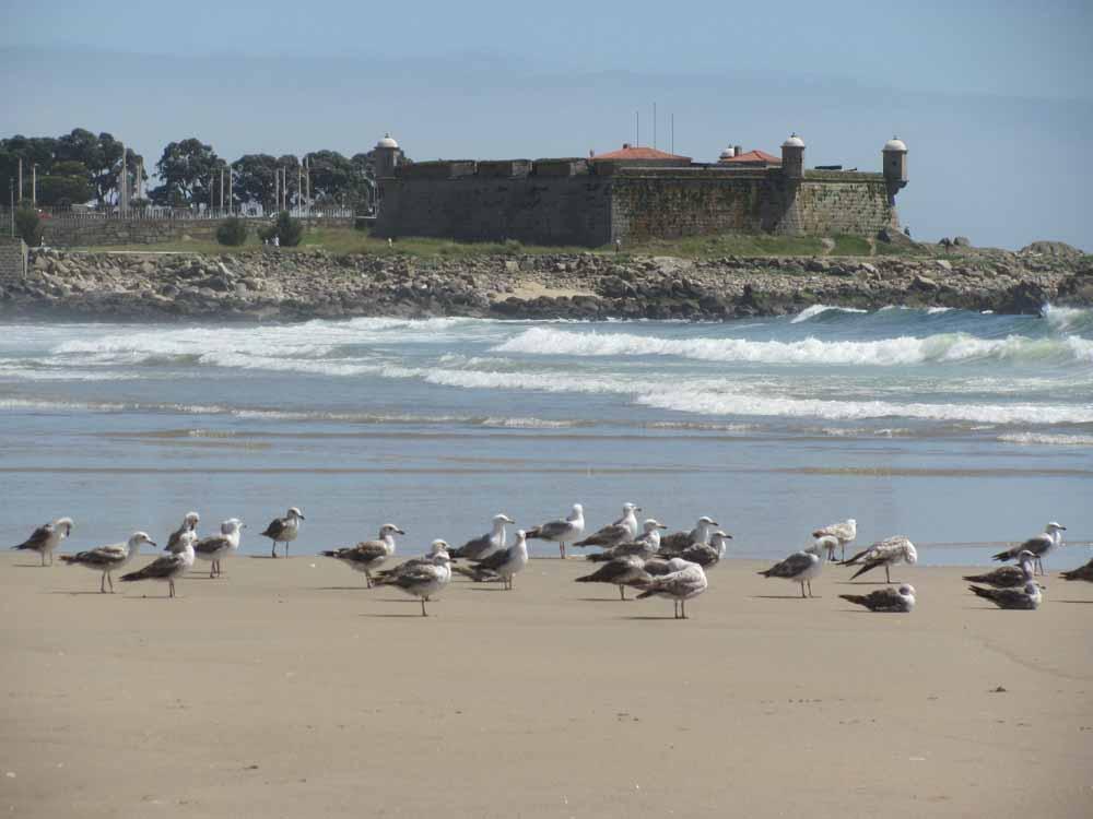 Matosinhos, day at the ocean25