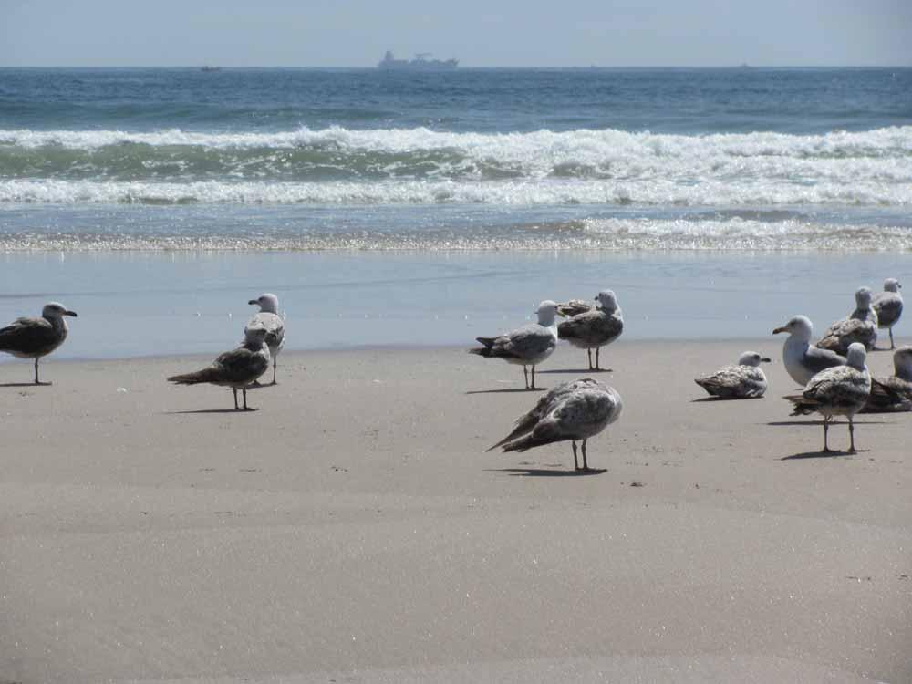 Matosinhos, day at the ocean26