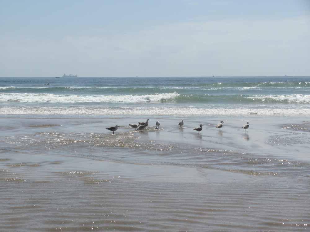 Matosinhos, day at the ocean28