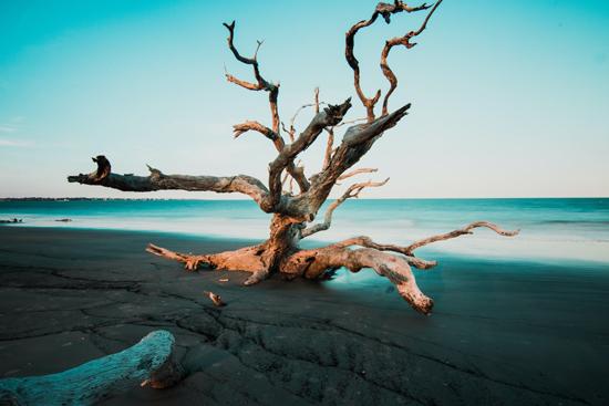 Jekyll Island zach-reiner-6HsMKCHho_I-unsplash